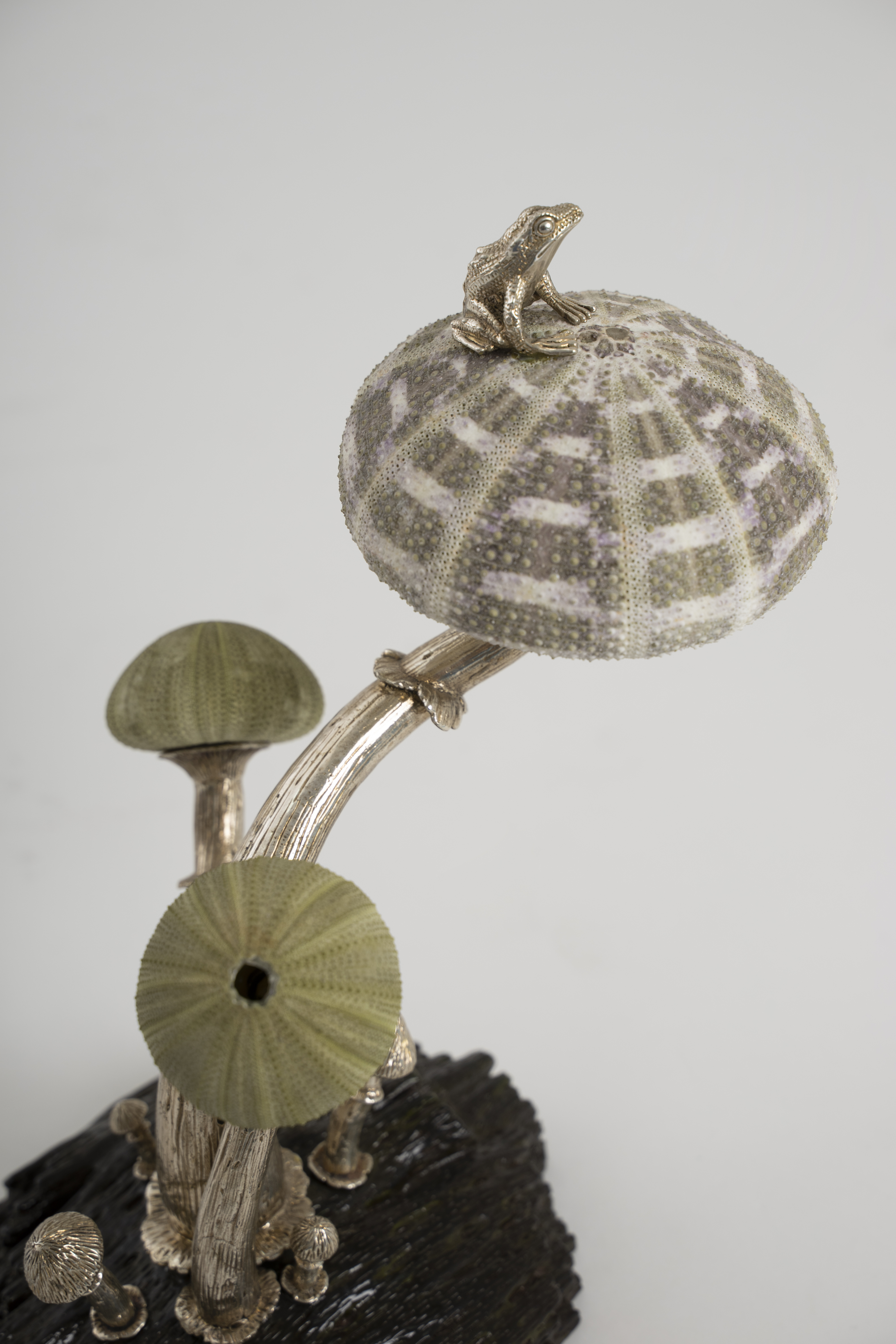 Arden Classic Inc., Home Accessories, Gifts, Sculpture, Natural, Sea Shells, Solid Brass, Brass